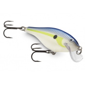 Scatter Rap Shad (9)